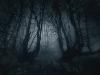 nightmare forest with creepy trees